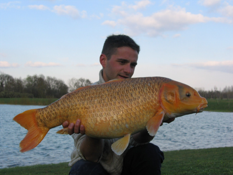 Comment pecher les carpes koi for Carpe koi blanche